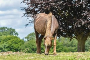 british horse breeds