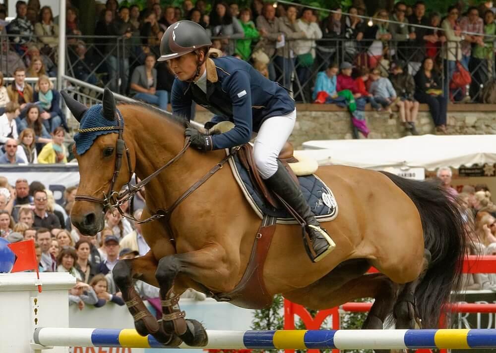 Zangersheide horse