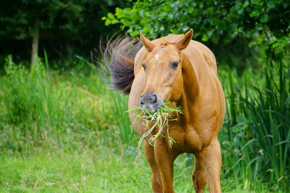 Advice For Feeding A Horse Correctly