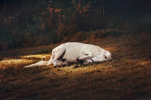 west nile virus in horses