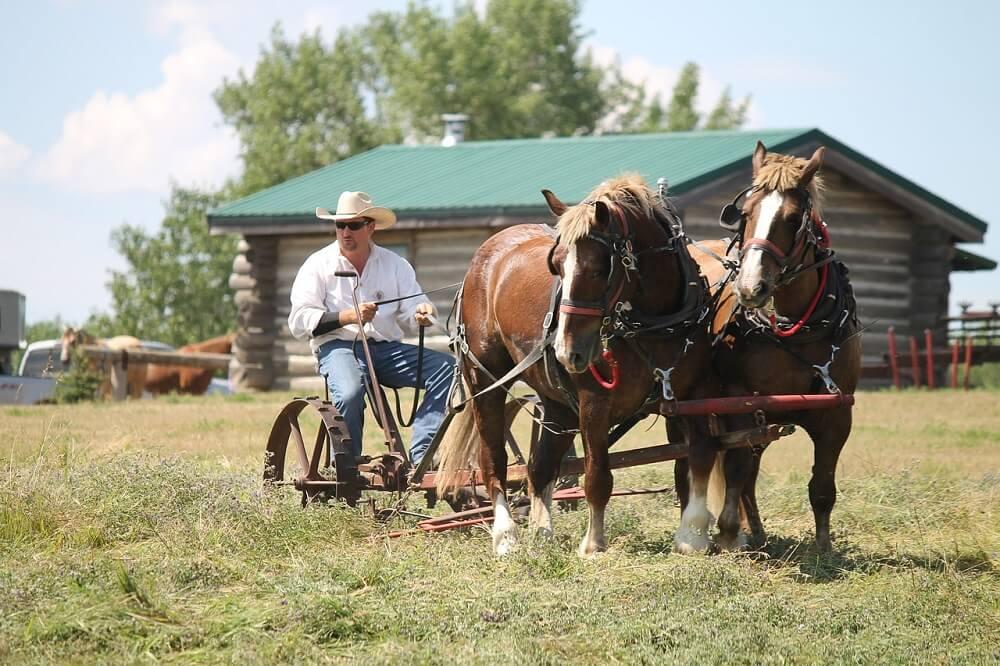 belgian horse breeds