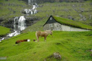 norwegian horse breeds