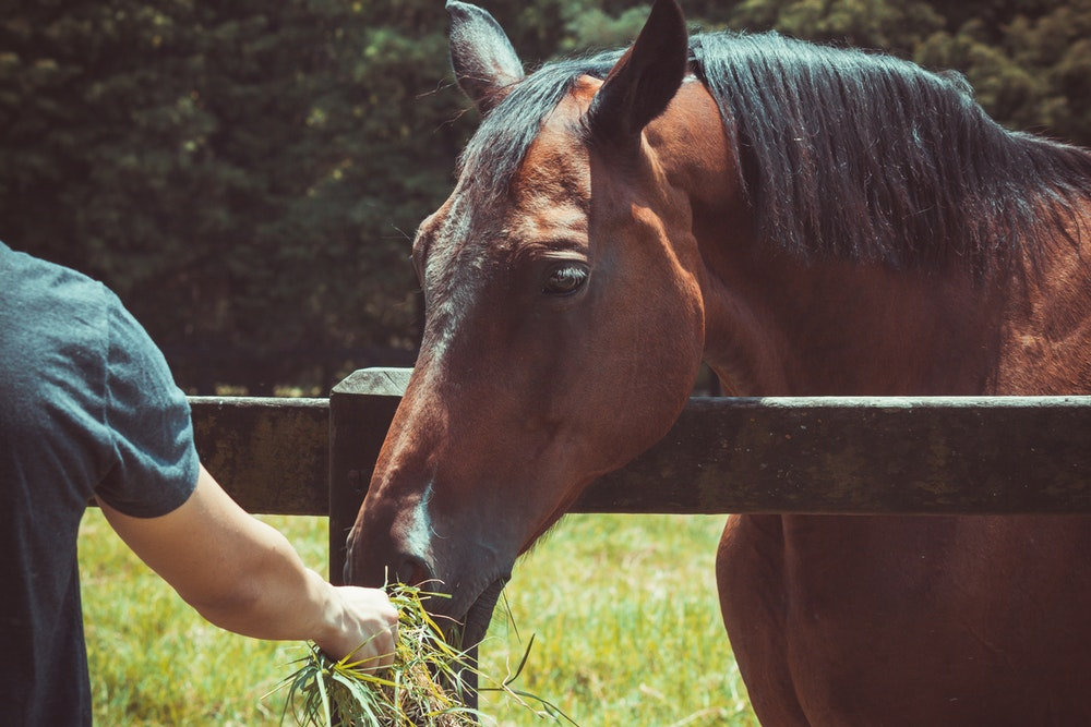 what to feed a horse with laminitis