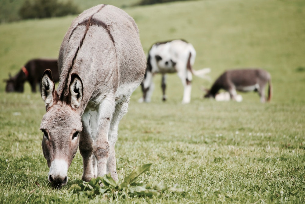 Donkeys' Nutritional Requirements