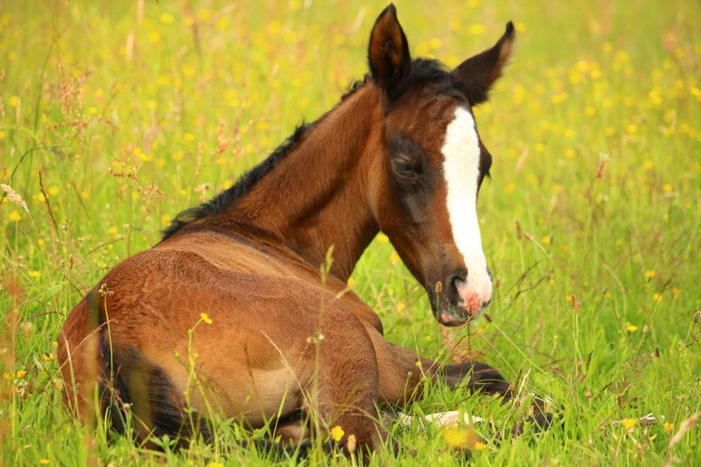 how to train a foal