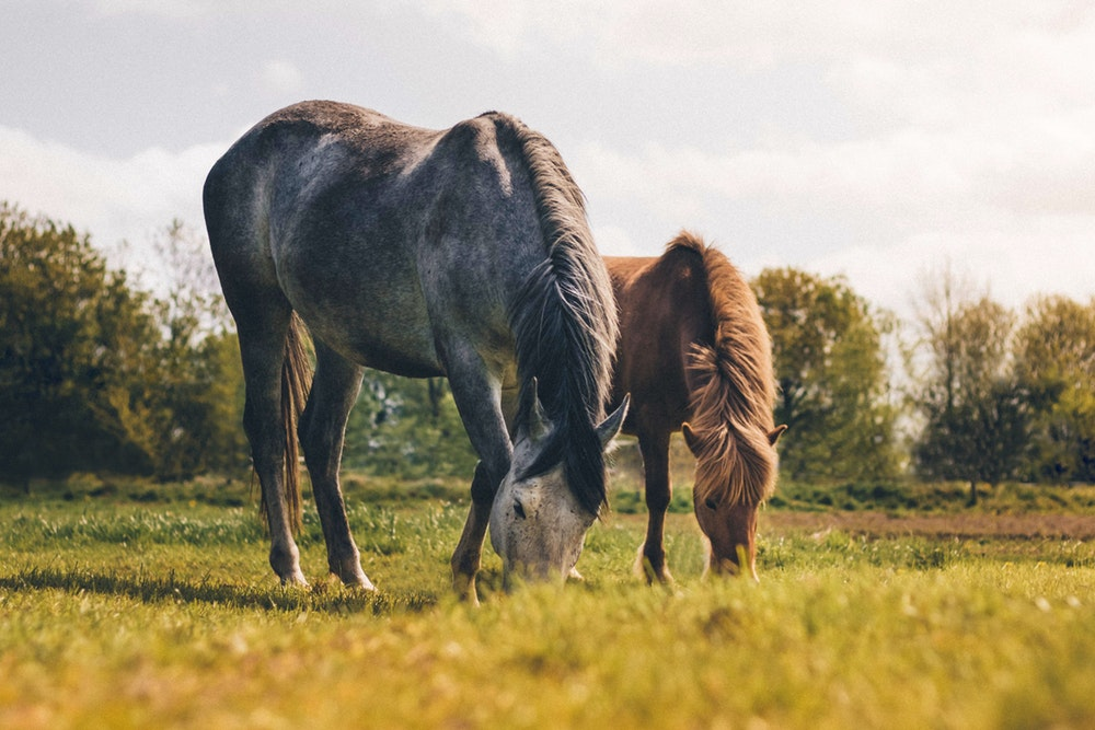 Why Is A High Fat Diet Valuable For Horses