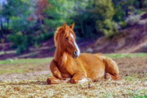 when to start training a young horse