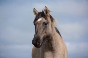 vitamin e deficiency in horses