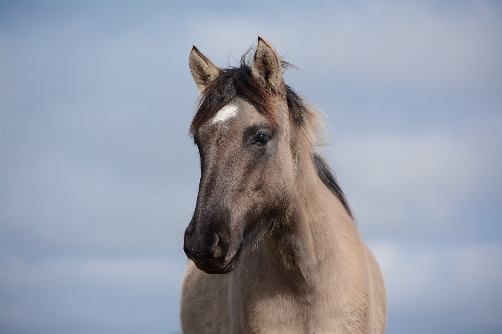 vitamin e deficiency in horses
