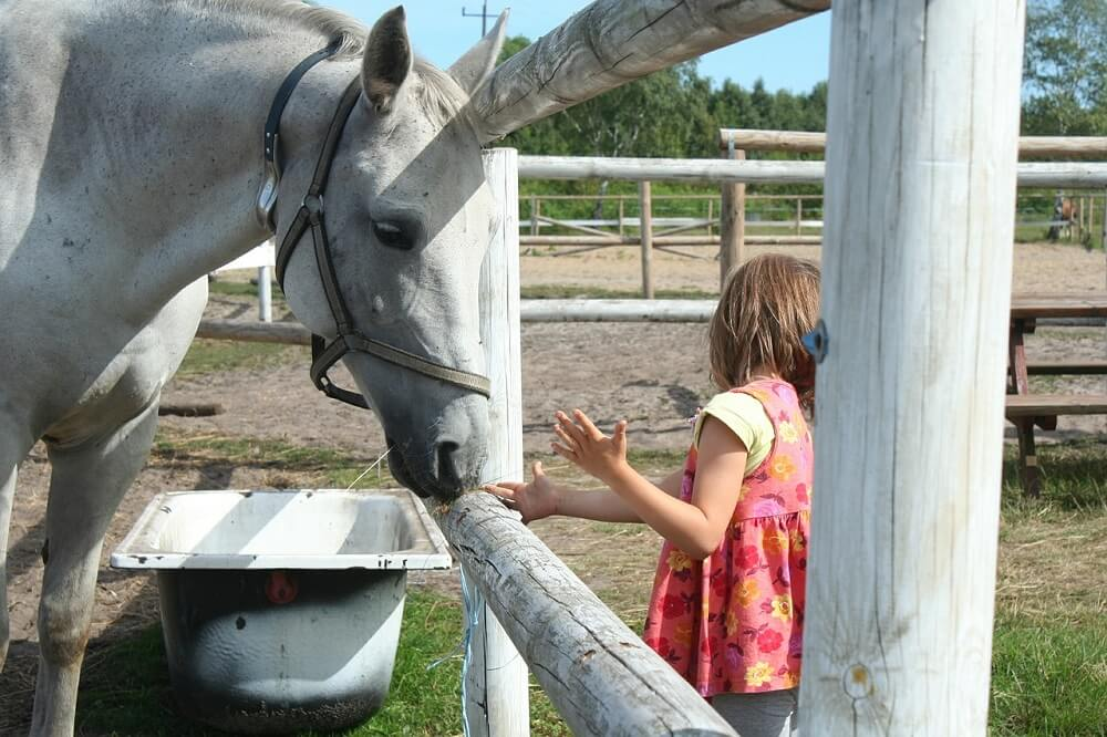 best horse treats