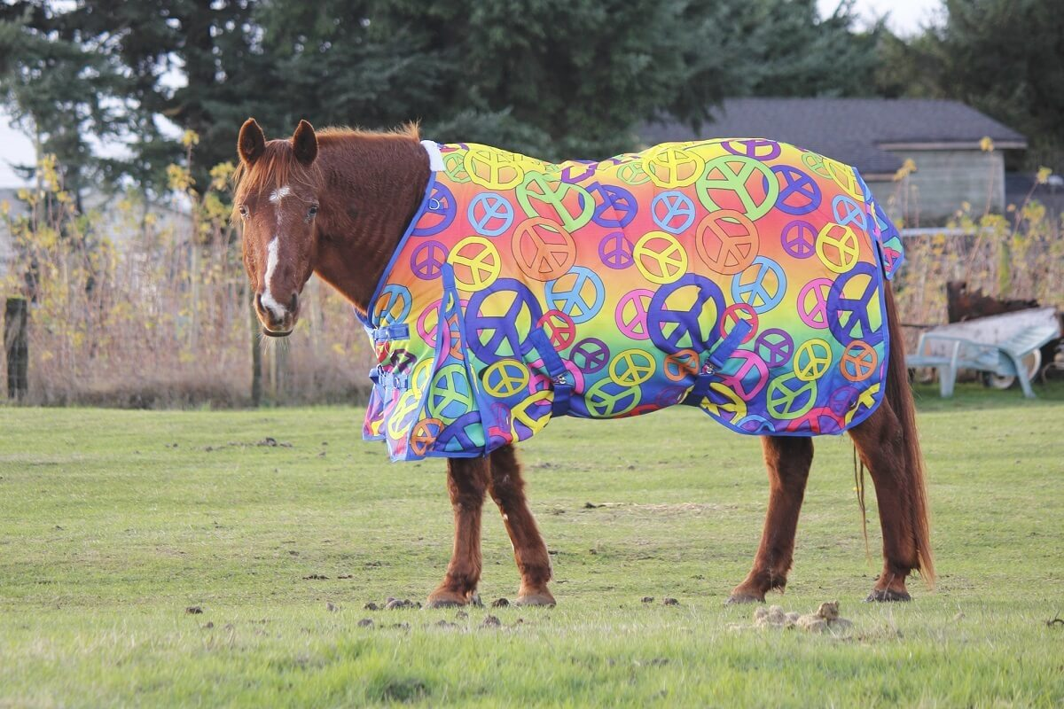 best therapy rugs for horses