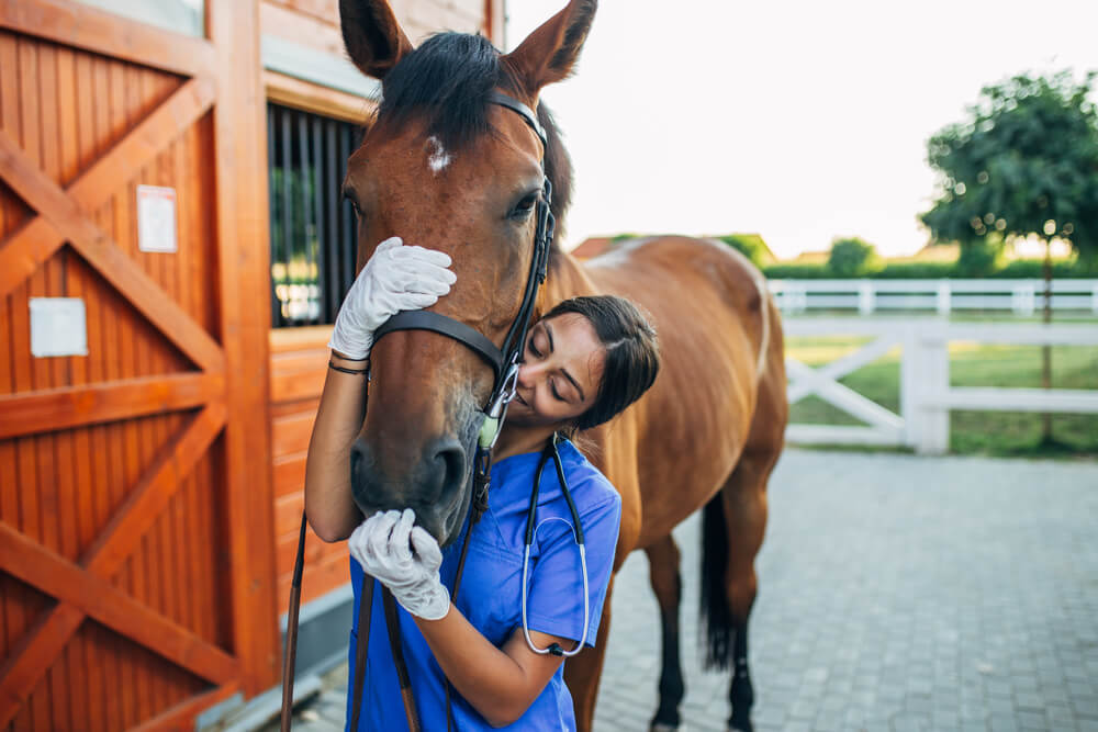 how to become a horse vet