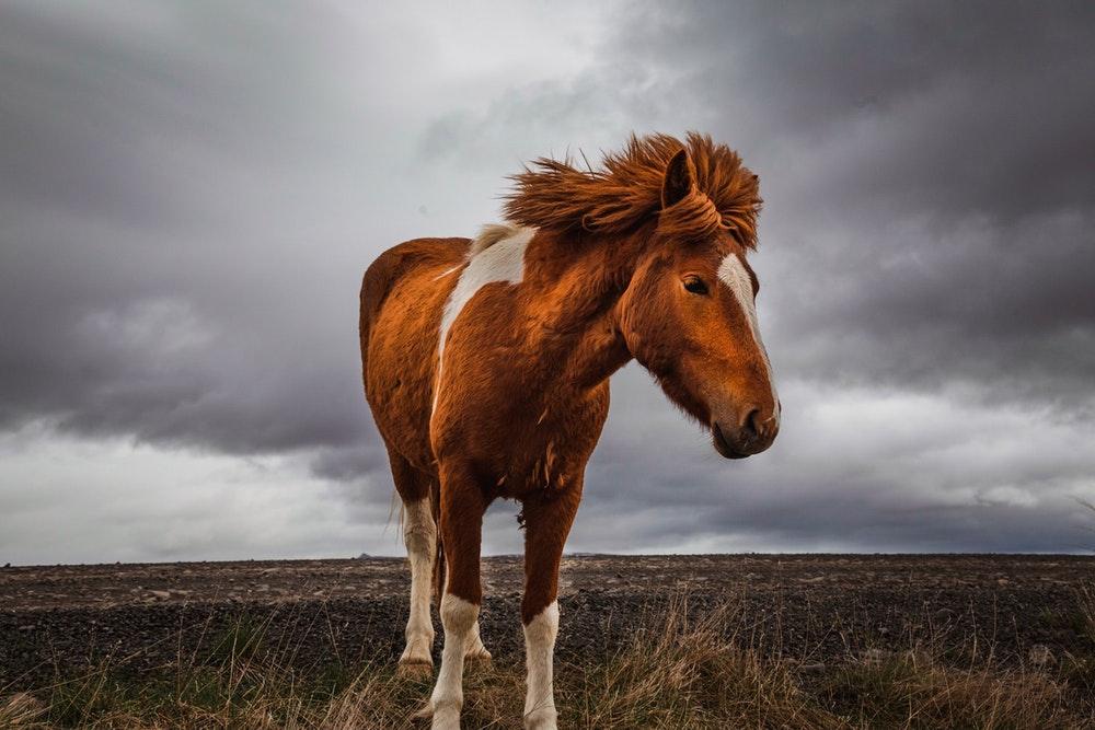 dsld in horses