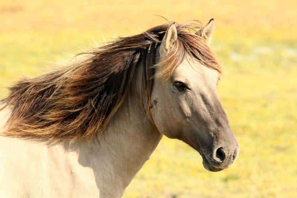best ulcer supplement for horses