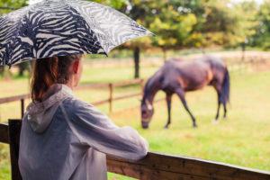 rain rot in horses home remedies