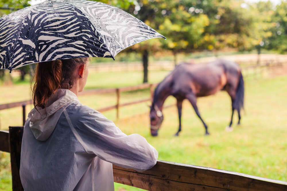 rain rot in horses home remedies