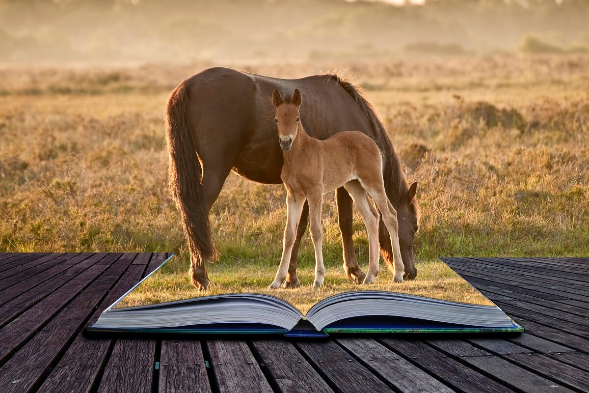 best horse training books