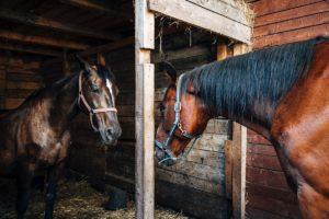training an older horse