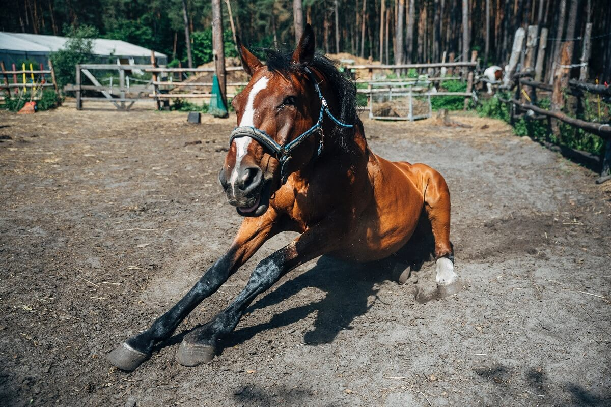 best horse mounting block