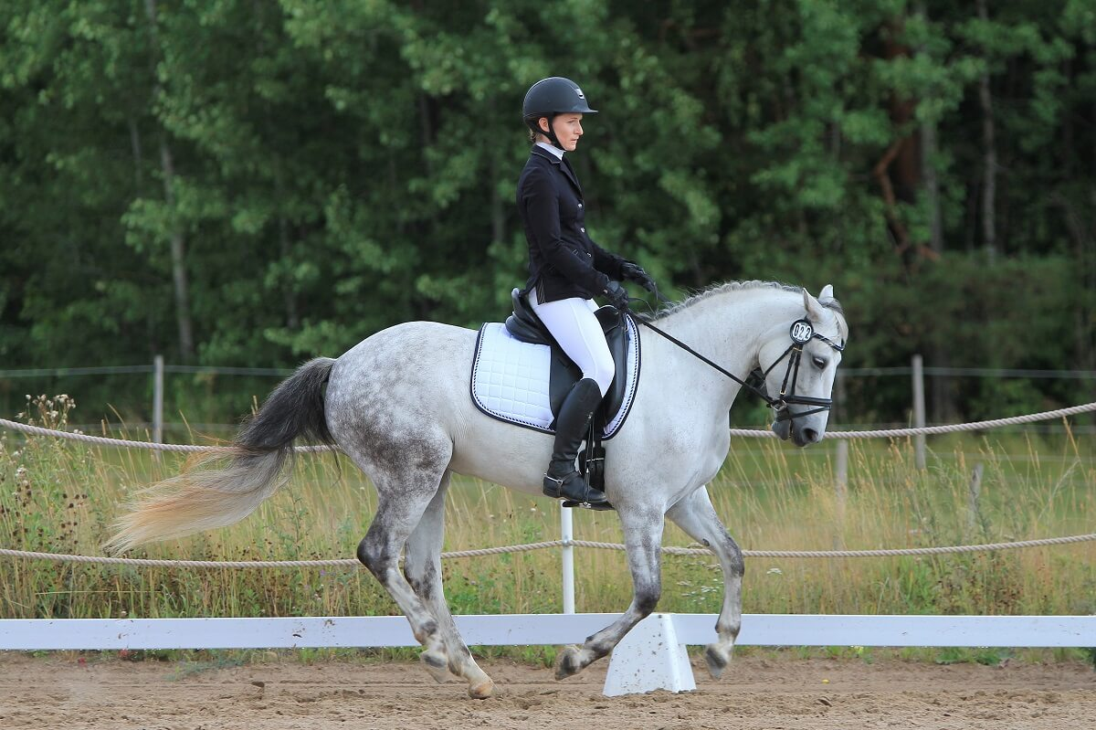 Smart Tips To Do Your Best In Equitation