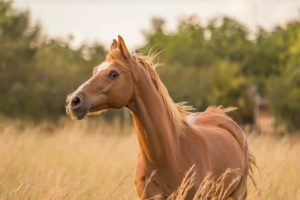 Teach Your Horse To Want To Come To You