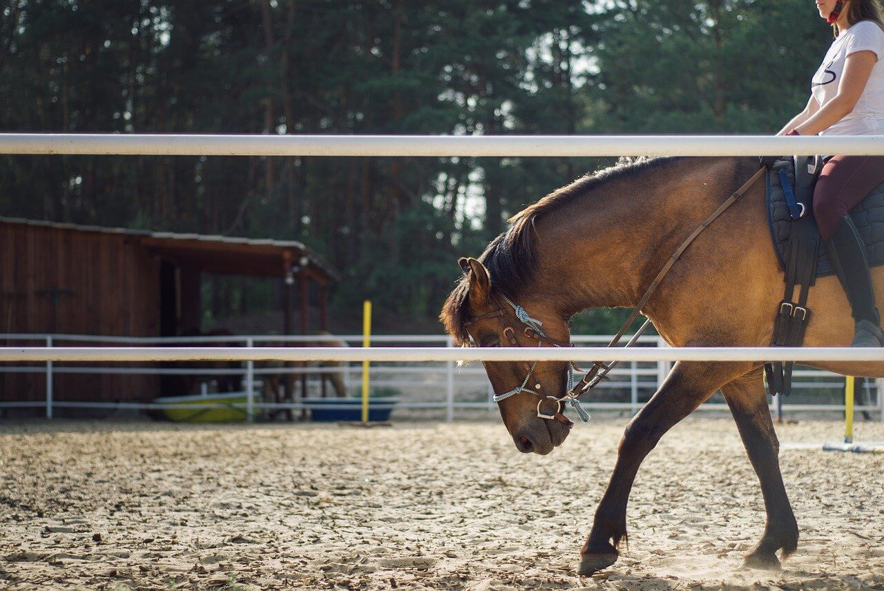 What Is Horse Training