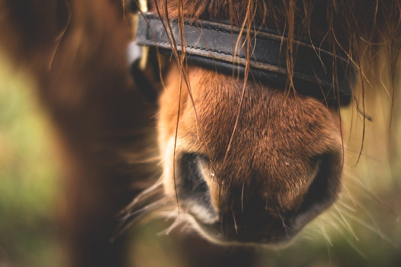 what does it mean when a horse nudges you with his nose