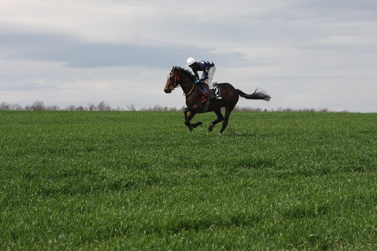 Owning A Racehorse Is An Expensive Hobby