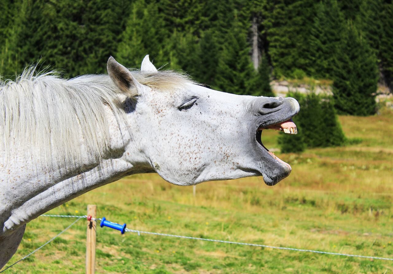 what does it mean when a horse yawns
