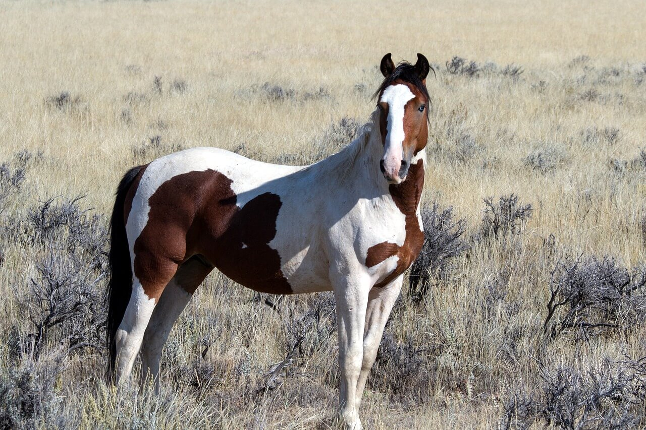do wild horses have hooves